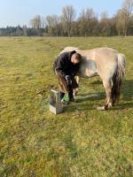 Behandlung der Wildpferde im Wacholderhain